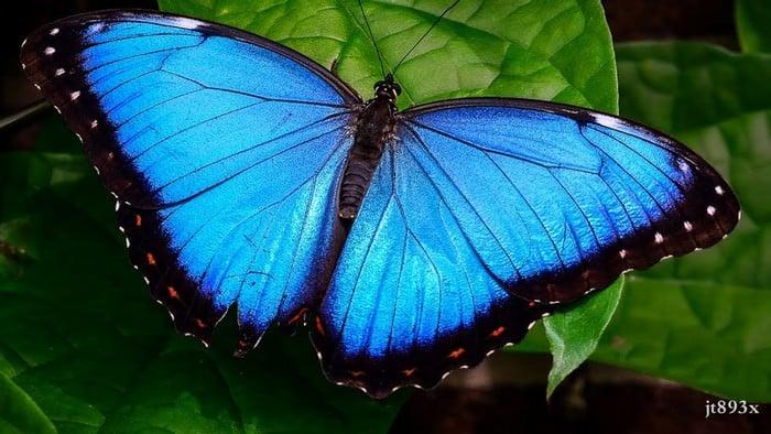 piękne motyle