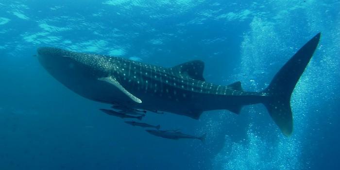10 największych ryb na świecie jakie złowiono