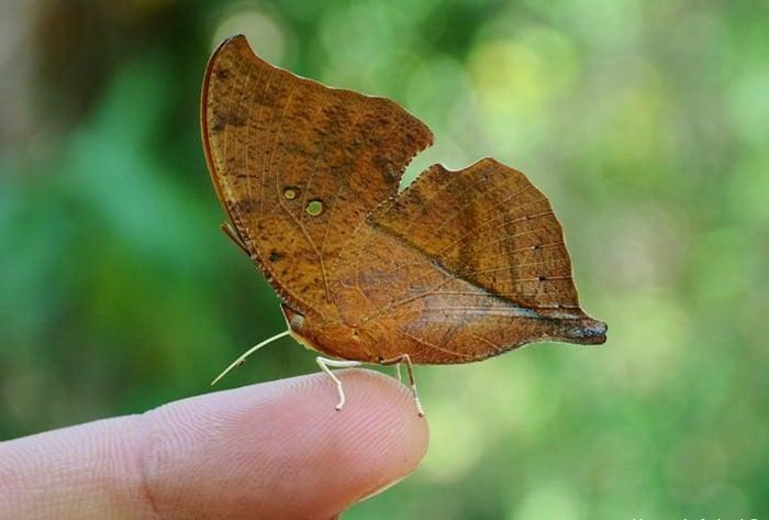 Top 10 fascynujących i niezwykłych motyli