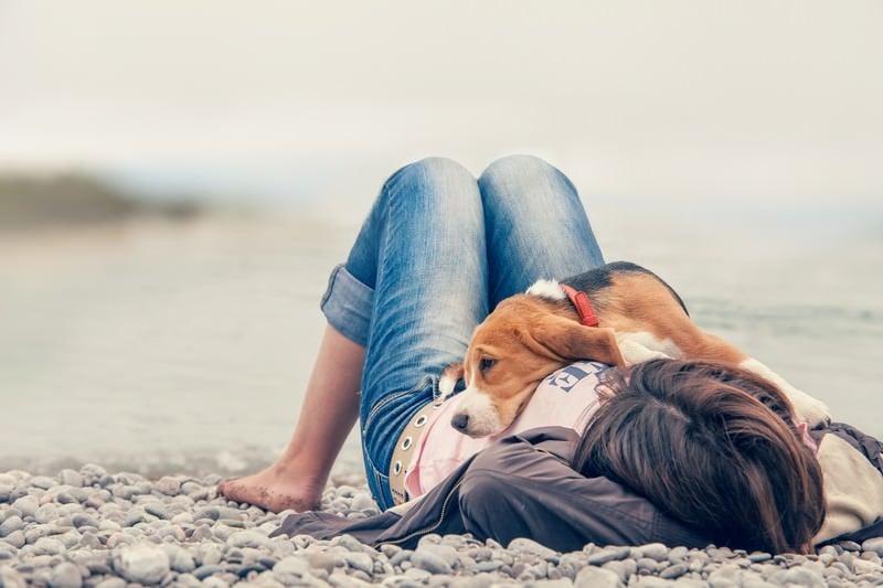 Zachowania psa – 10 rzeczy, które Twój pies robi i co to znaczy