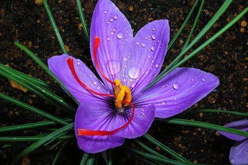Najdroższe kwiaty