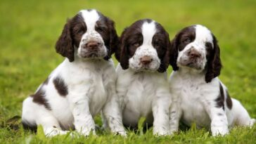 8 najlepszych i uroczych zwierzątek dla dzieci i rodzin