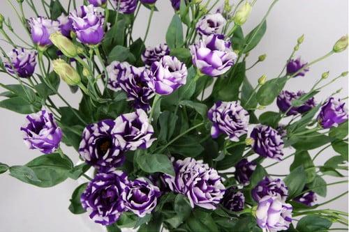kwiatów