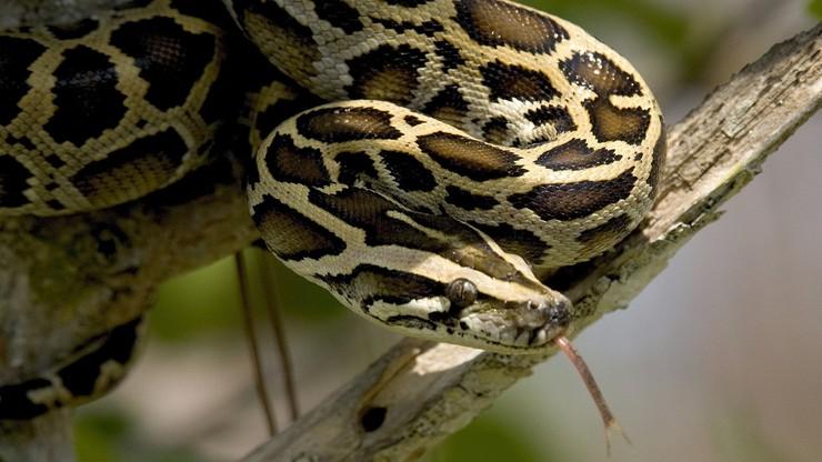 10 najbardziej śmiercionośnych węży na świecie